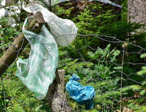 "A little less plastic: Bag ban a part of the ""new normal"""